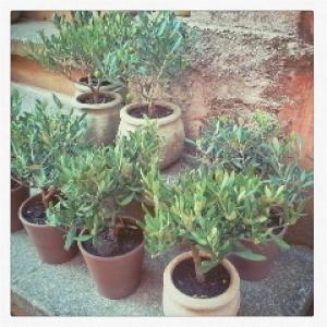 Un jardin en ville 1