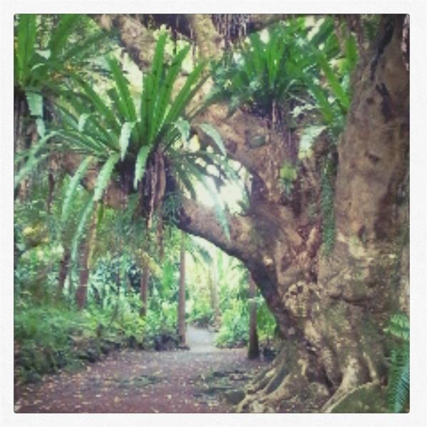 Le jardin des ar mes off le blog du pigeon voyageur for Le jardin voyageur