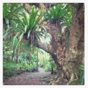 Jardin des arômes 4