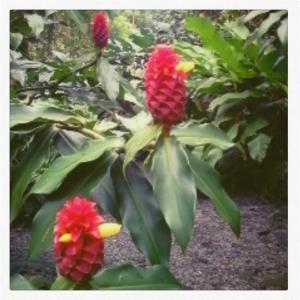 Jardin des arômes 5