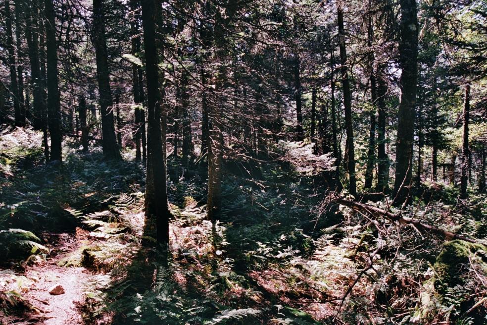 Mont-Tremblant 3