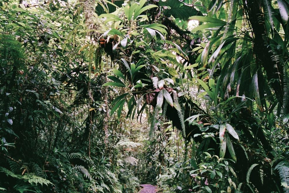 Cascade du Carbet 2