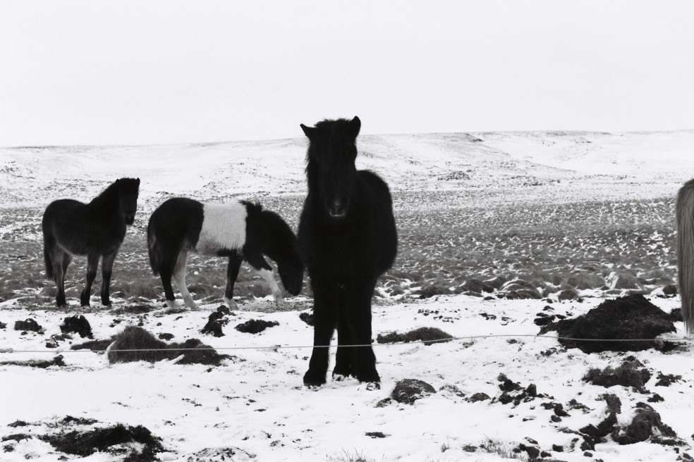 Islande B&W 8